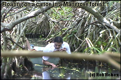 Mexicos Mangroves